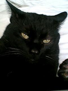 ネコ・腎臓病